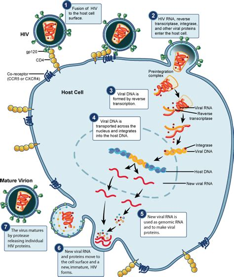 cytoplasm bacterial infections picture 9