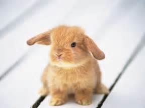 baby bunnies diet picture 1