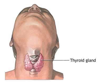 what does it means when the thyroid gland picture 8