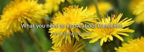 fatty liver and dandelion picture 1