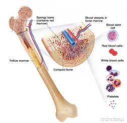 what is bone morrow suppression picture 17