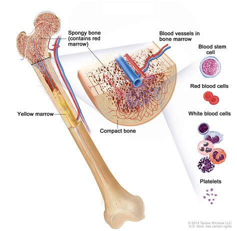 symptoms of bone marrow suppression picture 13