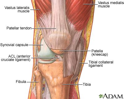 aging muscle m lose picture 1
