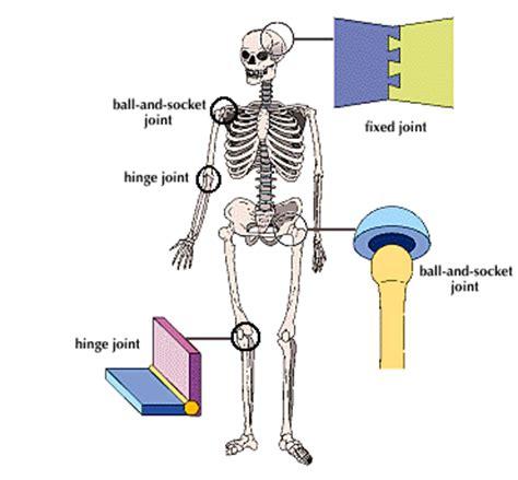 pivot joint skeleton human picture 11