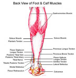muscle pull in foot picture 19