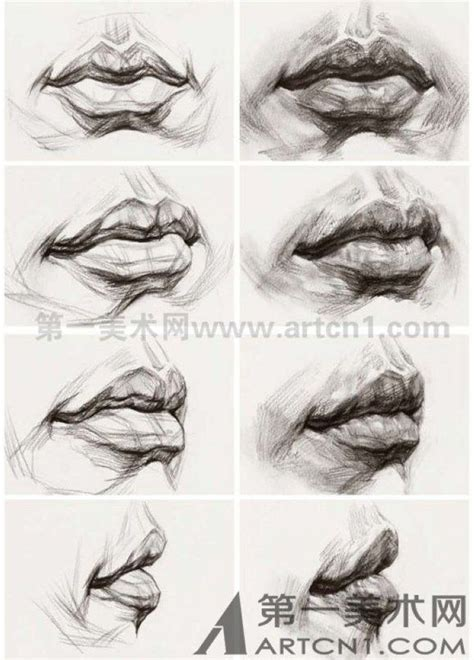 facial anatomy lips picture 19