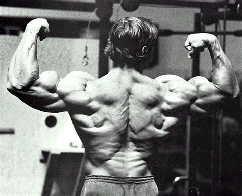 arnolds muscle pictures picture 17