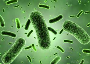 purchase tg1 bacterial strain picture 10