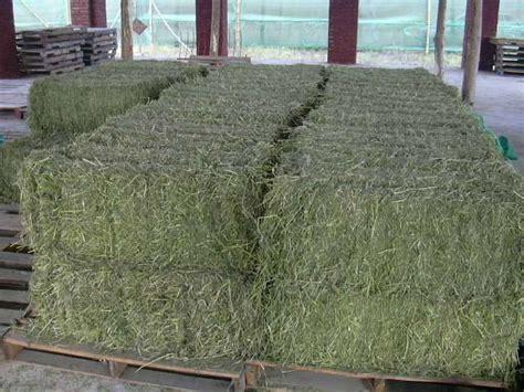 alfalfa bale prices picture 13