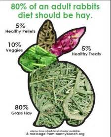 bunny diet picture 2