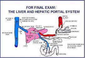 what systems does the liver work with picture 10
