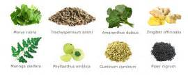 flat tummy tea ingredients picture 1
