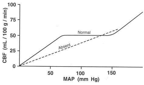 cerebral blood flow autoregulation picture 6