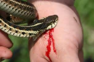 do all snakes have teeth picture 5