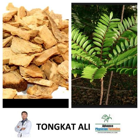 is tongkat ali a blood thinner picture 17