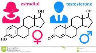 testosterone estradiol and progesterone picture 3