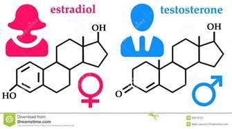 hormone picture 3