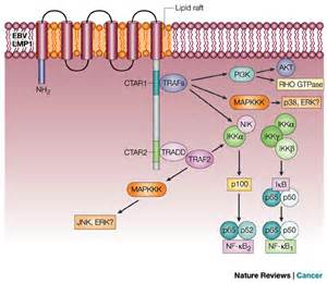 skin cancer viral proteins picture 2