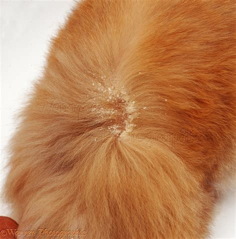 pictures of skin mites on dogs picture 2