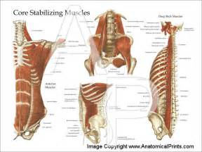anatomy deep back muscle picture 7