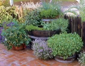 Herbal garden design picture 7