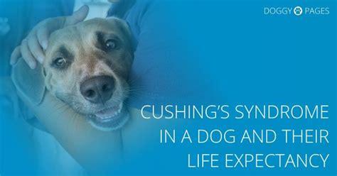 cushings diseasen the aging picture 5
