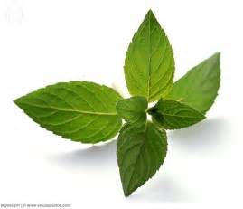 peppermint picture 10