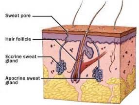 glandular allure of the skin picture 17