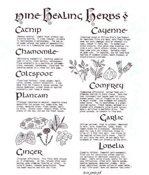 wiccan herbs and their meanings picture 5