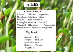 alfalfa health benefits picture 1