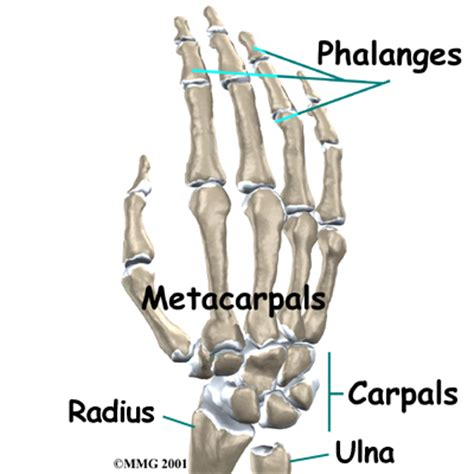 whole body joint stimulus coupon code picture 5