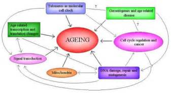 the aging process picture 2