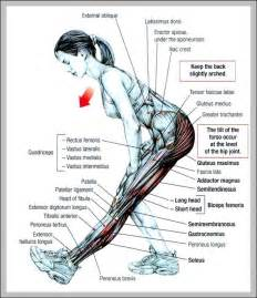 muscle chart picture 7