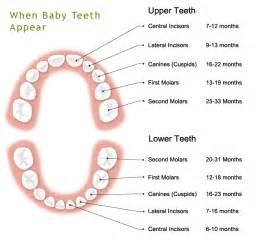 baby teeth picture 7
