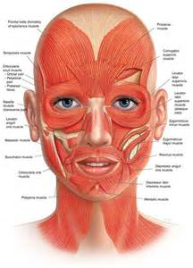 face muscle picture 6