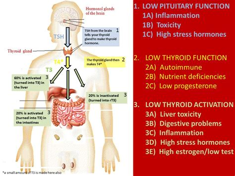 foods to correct low thyroid function picture 10