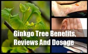 side effects of ginkgo biloba picture 6