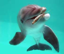 a dolphin's diet picture 1