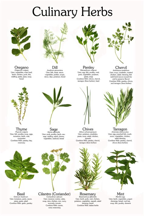 what herbs are good to open the veins picture 2