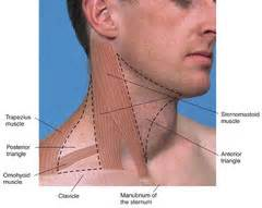 occipital lymph nodes hyperthyroidism picture 3