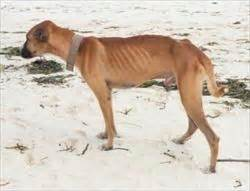 causes of canine loss of appee picture 5