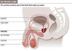 Masterbation prostate health picture 7