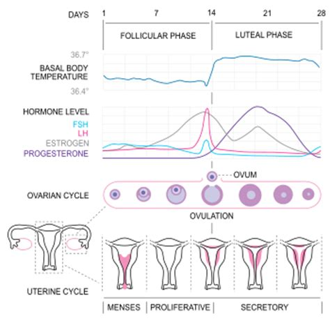 irregular menses thyroid function picture 1