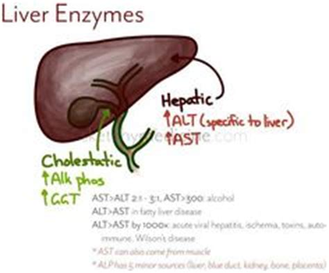 senna and high liver enzyme levels picture 2