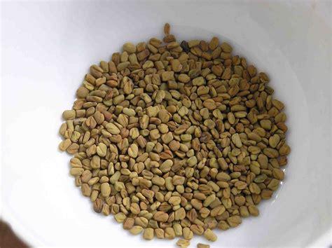 fenugreek seed picture 9