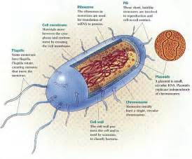 bacterial characteristics of salmonella picture 3