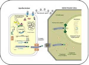 gastrointestinal bacteria specific latino picture 15