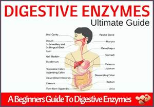 which enzymes are good for digestion picture 5