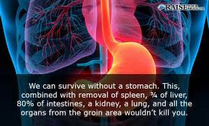 information on gastrointestinal picture 10