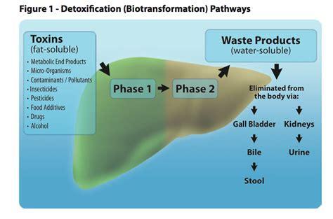 colon detoxification picture 9